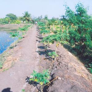 Water Harvesting Structures create by Janakalyan for the tail end farmers
