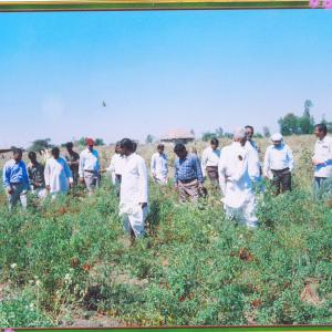 Vegetable Cultivation before Janakalyan interventions
